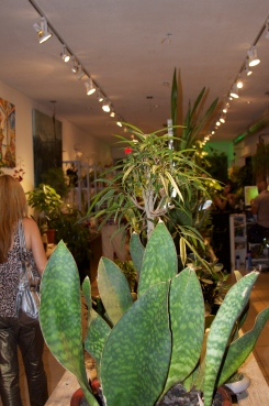 lush_plants_gallery_fort_lauderdale
