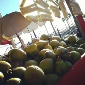 Fresh coconuts ready to eat