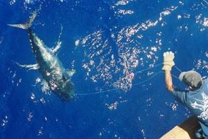 Fishing boat Fort Lauderdale Florida